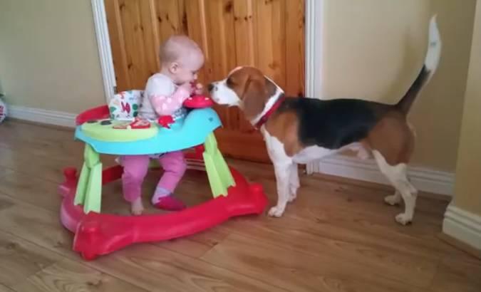 Il rapporto tra un bambino e un cane in un video for I cani youtube