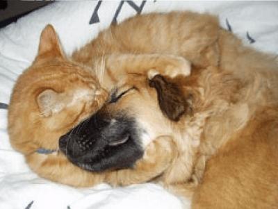 cane gatto9c