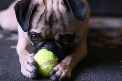 cane gioco1