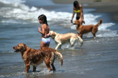 ITALY-ANIMAL-FEATURE-BEACH-SUMMER