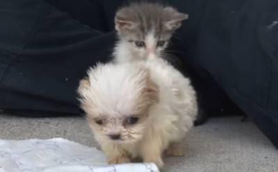 cuccioliiii