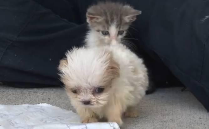Cuccioli Irresistibili Lamicizia Tra Un Gatto E Un Cane