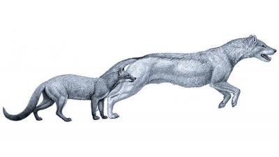 evoluzione cane