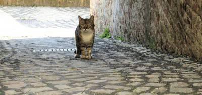 gatto randagio2