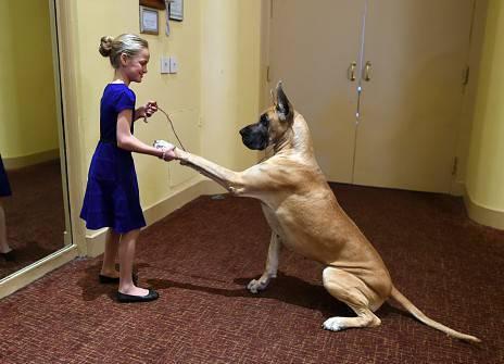 cane orosocpo