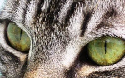 gtto occhi