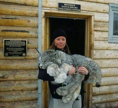 lince-3
