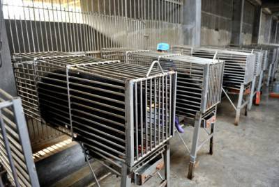 Bears are kept in steel cages at one of