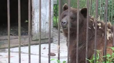 orso gabbia