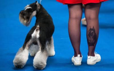 CHINA-ANIMAL-DOG-SHOW