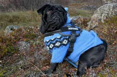 cane abbigliamento