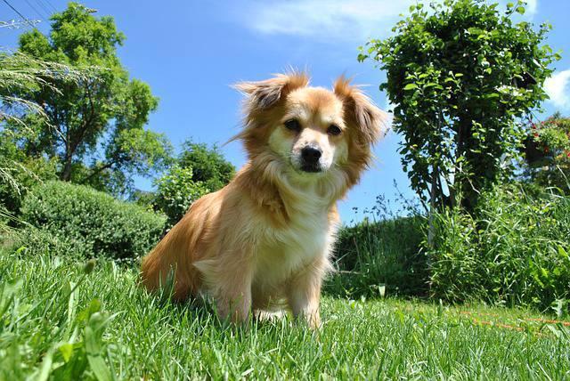 Cani in giardino le accortezza da prendere - Cosa mettere al posto dell erba in giardino ...