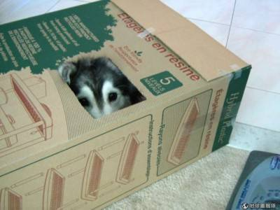 cane nascosto