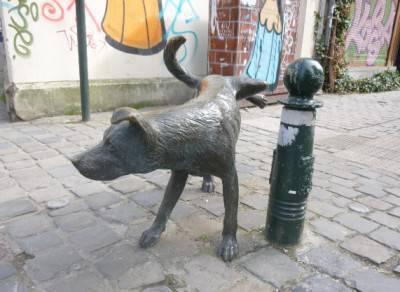 obbligo pulizia pipì cani