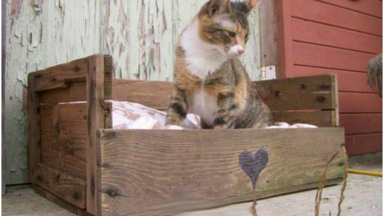 Cuccia Gatto Fai Da Te come scegliere la cuccia per un gatto?