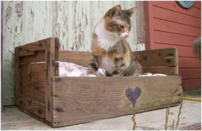 cuccia gatto2