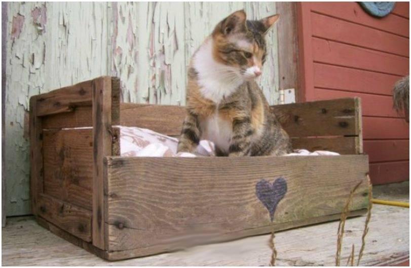 Come scegliere la cuccia per un gatto?