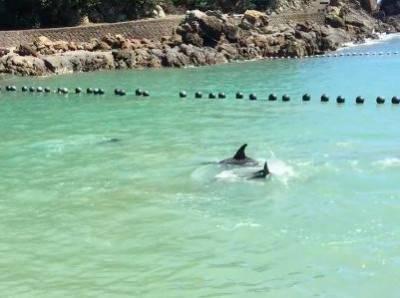 delfin taiji
