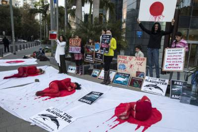 """Israeli members of the """"Taiji Dolphin Action Group"""" take part in a protest against the killing of dolphins, notably in the Japanese city of Taiji on January 30, 2014 outside the building housing the Japanese Embassy, in the Mediterranean coastal city of Tel Aviv. Similar rallies outside Japanese consulates and embassies were expected to take place worldwide. AFP PHOTO / JACK GUEZ        (Photo credit should read JACK GUEZ/AFP/Getty Images)"""