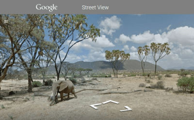 elefanti google