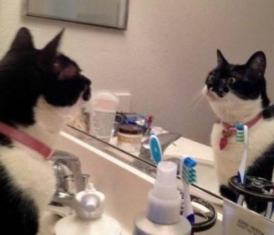 gatto specchio6