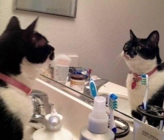 I gatti allo specchio galleria fotografica - Bambini che si guardano allo specchio ...
