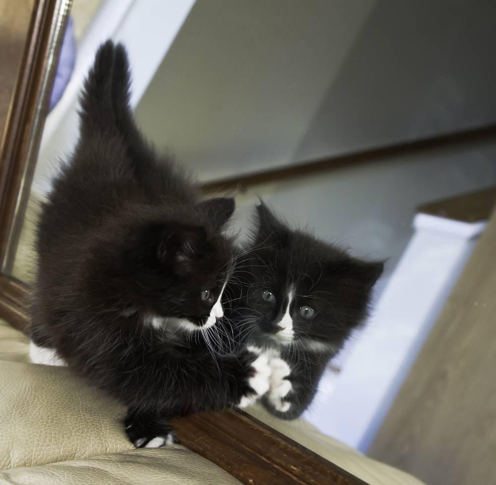 I gatti allo specchio galleria fotografica - Cane allo specchio ...