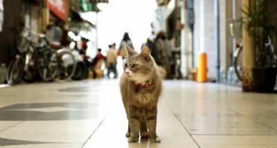 gatto strada