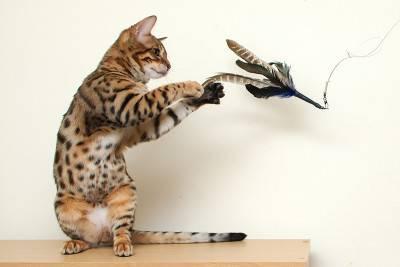 gioco gatto4