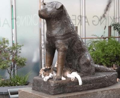 hachiko gatto