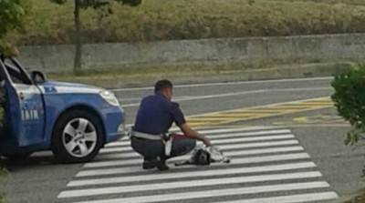 poliziotto cane investito