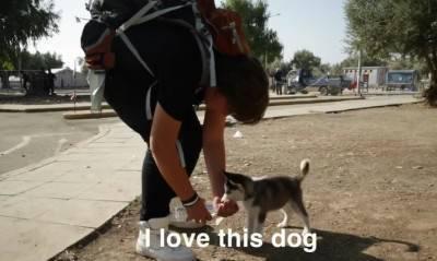 rifugiato cane