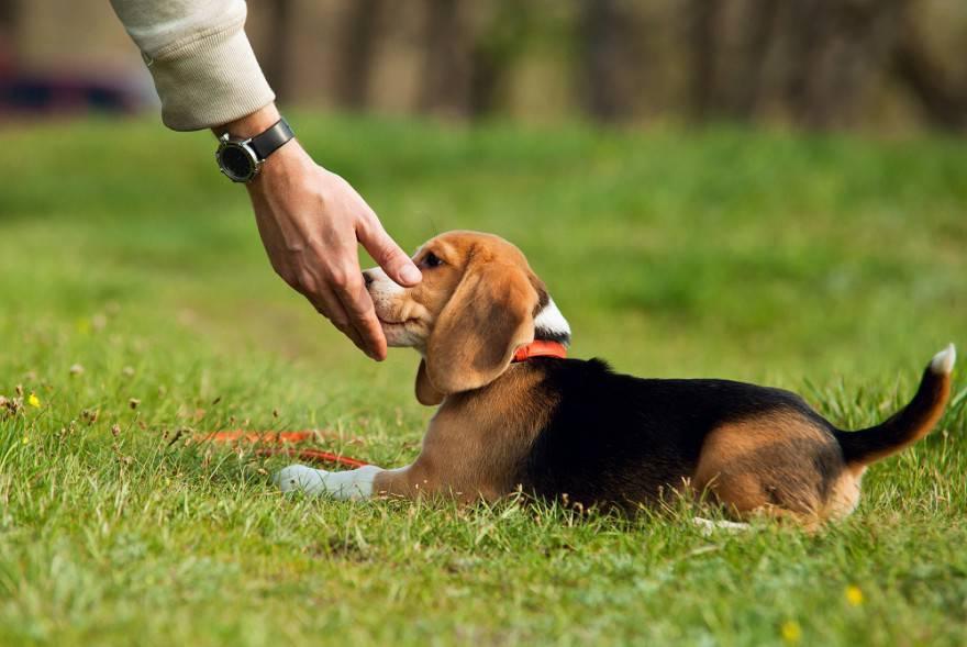 cane carezze