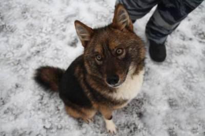 Sulimov Dog