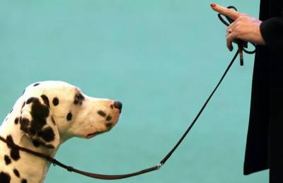 detenzione cani