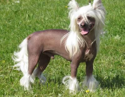 cane nudo
