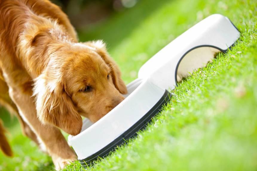 5 sostanze nutritive principali cane