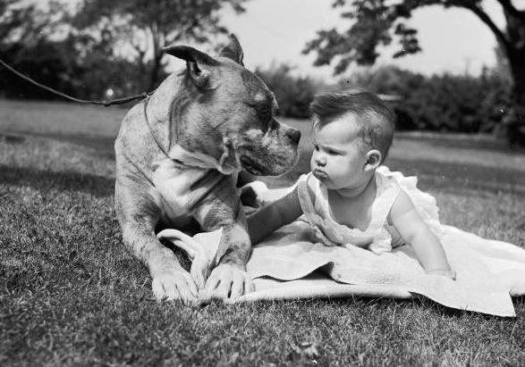 Preparare un cane all 39 arrivo di un neonato for Piani di casa con la stanza del cane