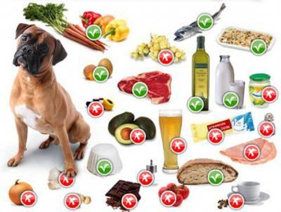 cane con cibo giusto