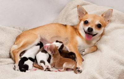 cuccioli mamma