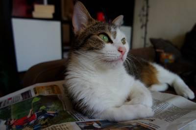 gatto casa1