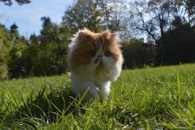gatto giardino1