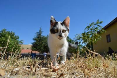 gatto giardino12