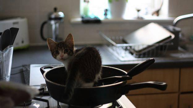 Pericoli domestici per i nostri gatti