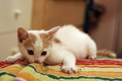 gatto7
