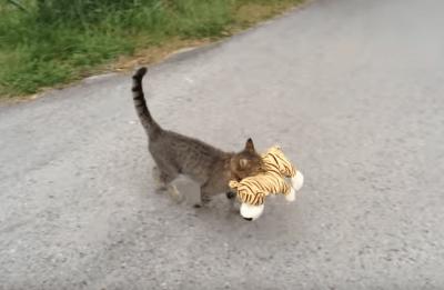 gattopeluche
