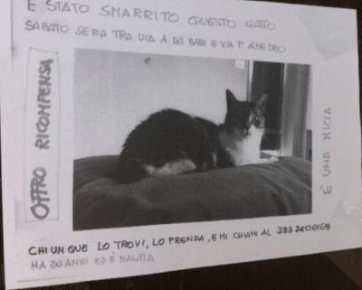 gattosmarrito