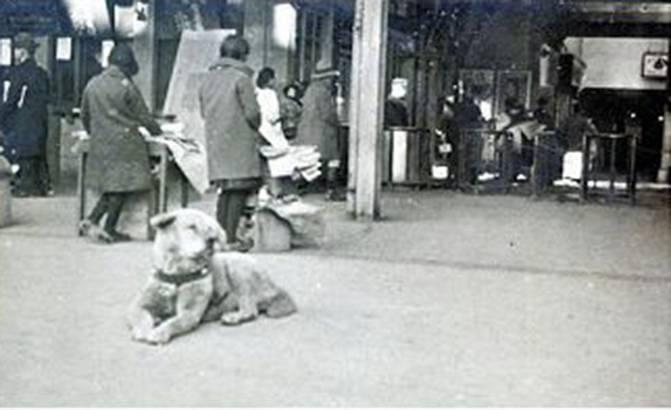 中国に現れた「忠犬ハチ公」 心配した人々が食べ物届ける