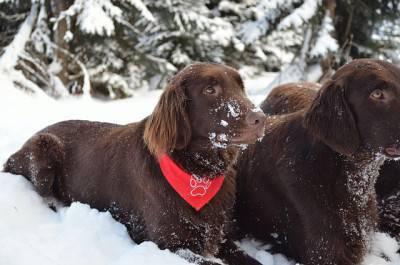 inverno cani