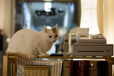 neko cafè- gatti